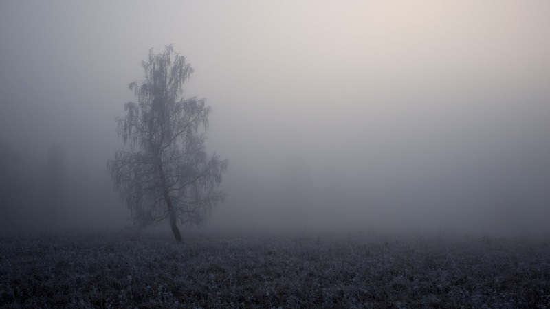 fog-tree-nature